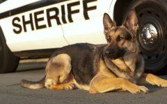 Sospechoso Muerto Despues de Matar a un Perro Policia