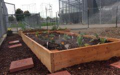 """""""Seed folks"""" inspira a los estudiantes a construir el jardín de Lincoln"""