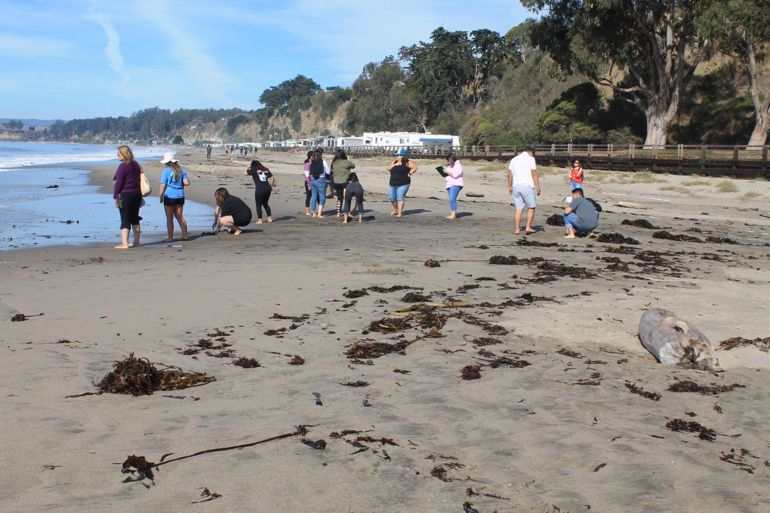 Lincoln students looking for sand crabs at Sea Cliff.