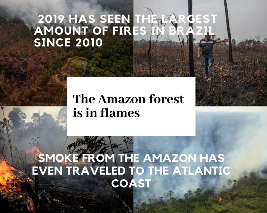 The Amazon: Our Lungs
