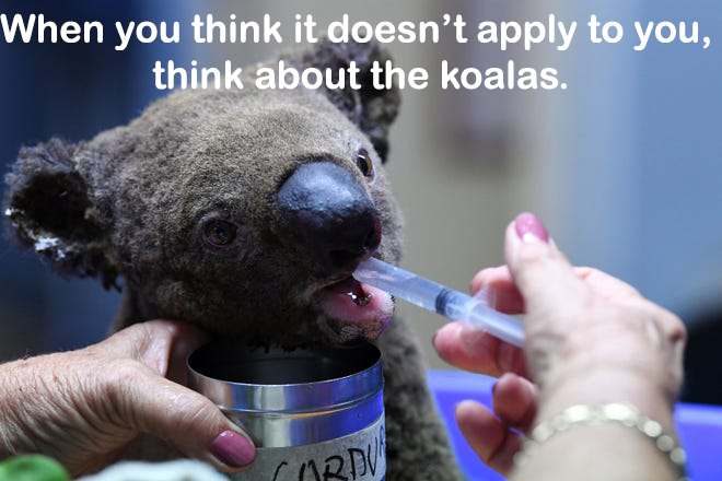 A+Koala+almost+burned+to+death+by+the+Australia+fires.+